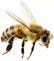 Albina zburatoare