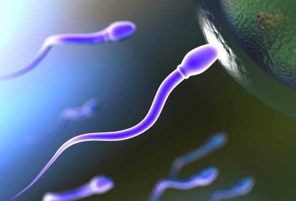 Fertilitate femei